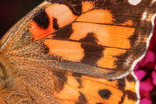 A Close-up View On An Orange Butterfly Wing, Nice Texture - Macro Shot