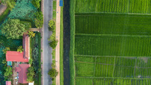 Ariel View Of A Paddy Field Adjoining A Walking Track In Urban Sri Lanka