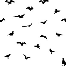 Set Of Different Gull Silhouettes. Flying, Eating, Going, Taking Off. Seamless Pattern.