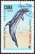 Spotted Dolphin (Cuba 1984)