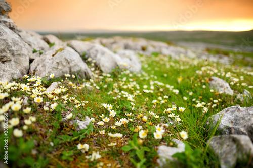 Obraz na plátně  Spectacular landscape of the Burren region of County Clare, Ireland