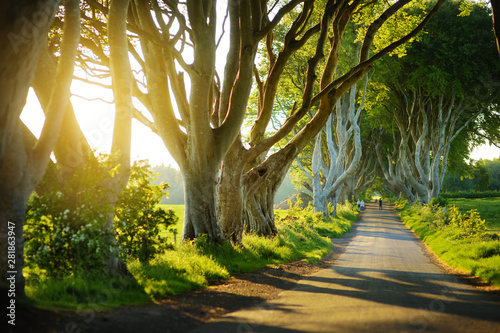 Foto auf Leinwand Nordlicht The Dark Hedges, an avenue of beech trees along Bregagh Road in County Antrim. Tourist attractions in Nothern Ireland.