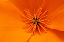 Fleur En Macro