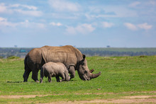 Rhino Family Profile In Landsc...