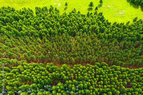 Aerial view of grass forest in mulan paddock Wallpaper Mural