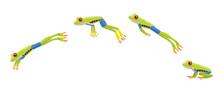 Red Eye Tree Frog Jumping Cartoon Vector Illustration