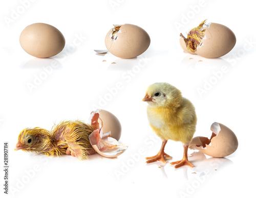 Valokuva Newborn Yellow chicken hatching from egg on white background
