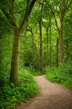 Beautiful Landscape Image Of Footpath Winding Through Vibrant Green Forest In Summer
