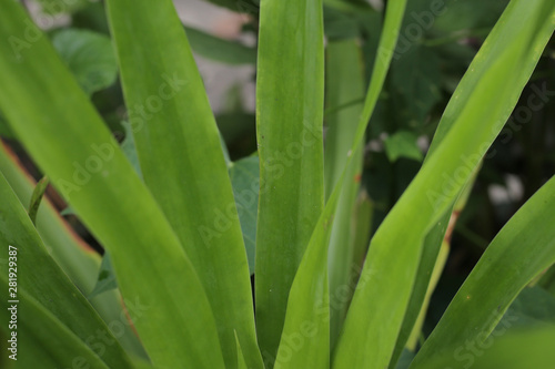green leaves of plant