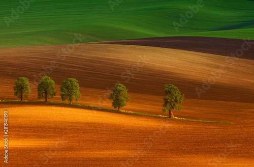 obraz lub plakat Rural abstract landscape with chestnut alley in South Moravia, Czech Republic