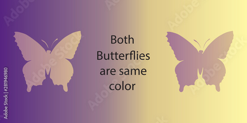 Tableau sur Toile Optical illusion. Both butterflies are the same color