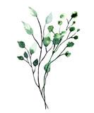 Akwarela gałąź z zielonych liści. Ręcznie malowany ilustracja kwiatowy. Liść, roślina odizolowywająca na białym tle. - 281958121