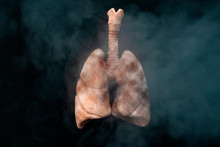 Cigarettes Harm Your Health, L...
