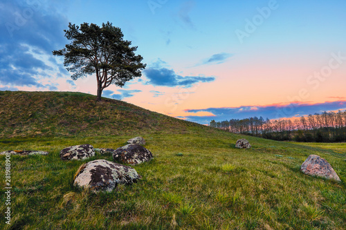 Wall Murals Roe Colorful landscape with a lone pine tree on the hill at sunset