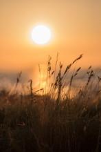 Sunset Through Wild Grass