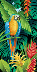 Fototapeta Ptaki Background with tropical jungle plants and parrot