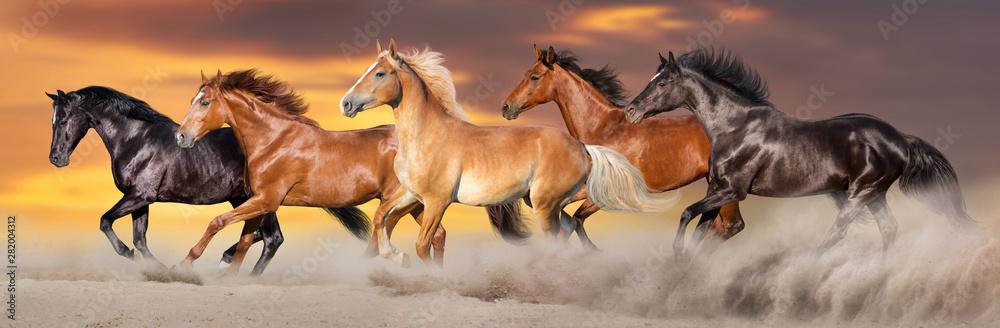 Fototapety, obrazy: Horse herd run gallop in desert dust against dramatic sky