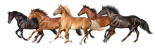 Herd Of Horses Run Gallop Isol...