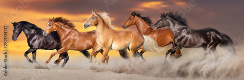 Fototapeta Horse herd run gallop in desert dust against dramatic sky