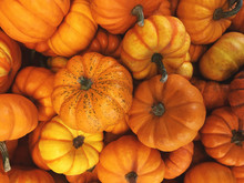 Pile Of Small Fall Pumpkins Th...