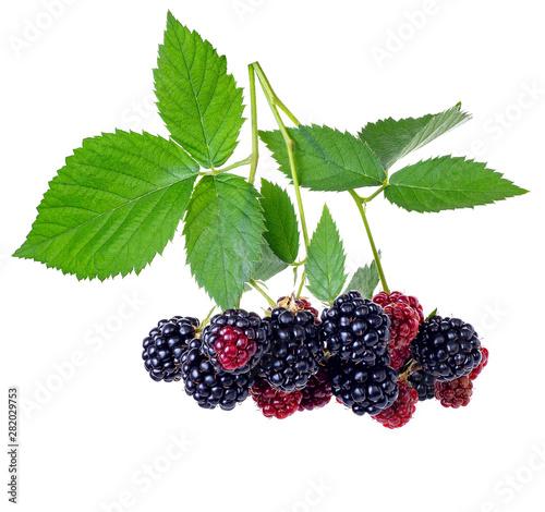 Fotografija branch of blackberries isolated on white