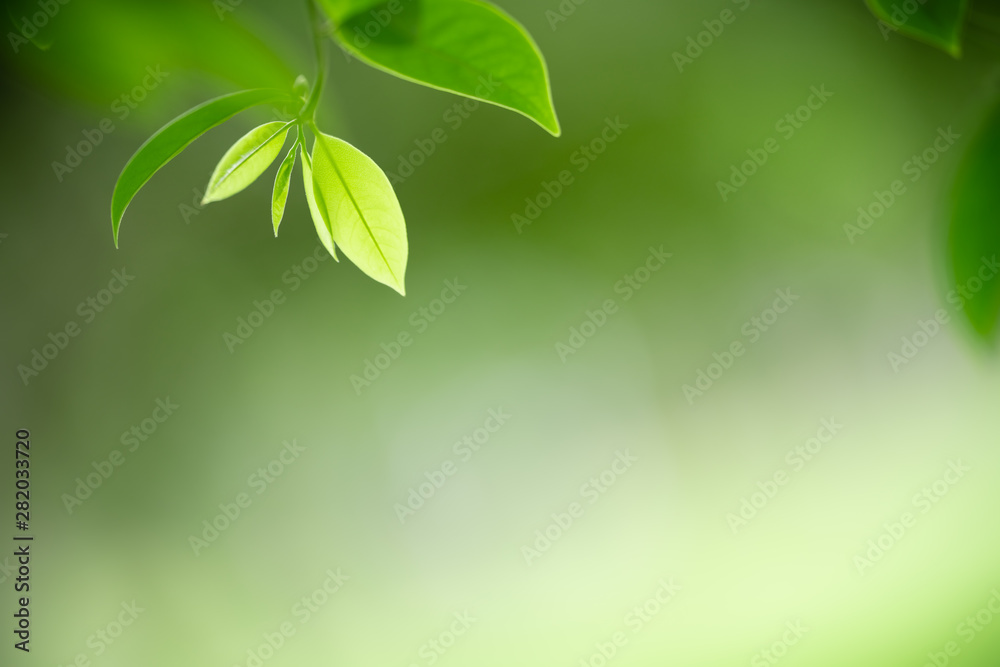 Fototapety, obrazy: abstract, backdrop, background, beautiful, beauty, blur, blurred, bokeh, bright, clean, color, colorful, concept, day, design, ecology, effect, environment, focus, foliage, forest, fresh, freshness, g