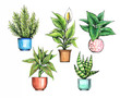 Set of indoor plants, pots with plants. Botanical elements for design.