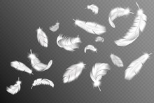 Flying Feathers. Falling Twirl...