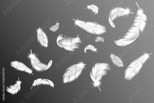 Foto  Flying feathers