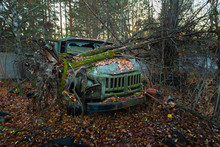 Fallen Tree On Abandoned Truck Left Outside