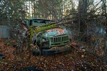 Fallen Tree On Abandoned Truck Left Outside