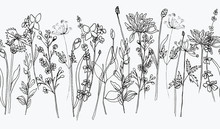 Hand Draw Ink Wildflowers, Wallpaper Border, Pattern White