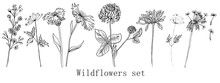 Hand Drawn Ink Wildflowers Set, Calendula, Clover, Dandelion