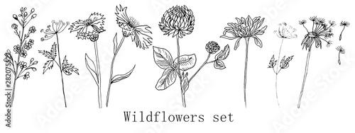 Fototapeta Hand drawn ink wildflowers set, calendula, clover, dandelion obraz