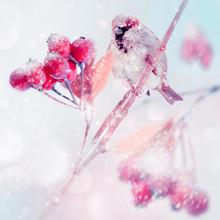 Winter Tender Magic Forest Tal...