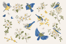 Classis Vintage Illustration. Blossom Garden With Tits. Birds And Flowers. Set