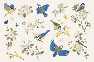 FototapetaClassis vintage illustration. Blossom garden with tits. Birds and flowers. Set