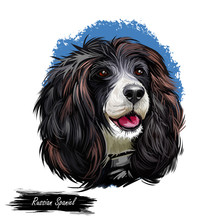 Russian Spaniel Dog Portrait Isolated On White. Digital Art Illustration For Web, T-shirt Print And Puppy Food Cover Design. Rosyjski Spaniel, Cross Breeding English Cocker And Springer Spaniels.