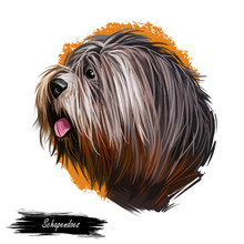 Schapendoes Dog Portrait Isolated On White. Digital Art Illustration Of Hand Drawn Dog For Web, T-shirt Print And Puppy Food Cover Design. Dutch Sheepdog, Nederlandse Schapendoes Dog Breed.