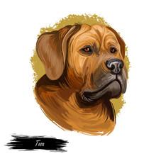Tosa Or Japanese Mastiff Dog B...