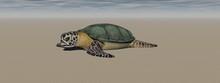 Brown Turtle In The Ocean - 3d Rendering
