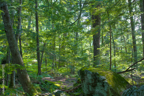 Green Woods Forest Trees