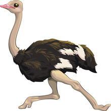 Vector Illustration Ostrich Fast Running. In Cartoon Style. Clipart Isolated On White Background