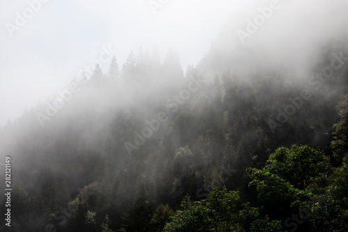 Foto auf AluDibond Weiß Foggy mysterious forest growing on hills