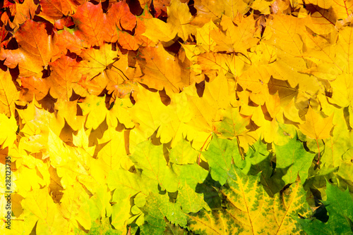 Türaufkleber Gelb Red and orange autumn leaves background. Outdoor. Colorful backround image of fallen autumn leaves