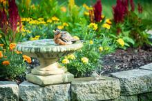 Robin Enjoying A Bird Bath On ...