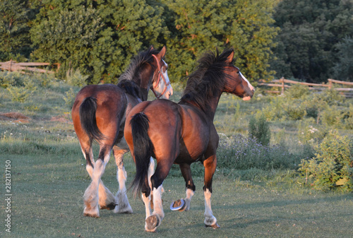 Two horses trotting in the pasture Canvas-taulu