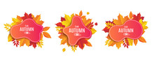 Set Fall Sale Banner Design. Autumn Sale Sticker Template. Promo Badge. Abstract Geometric Background With Colorful Falling Leaves. Fallen Foliage Backdrop. Vector Illustration