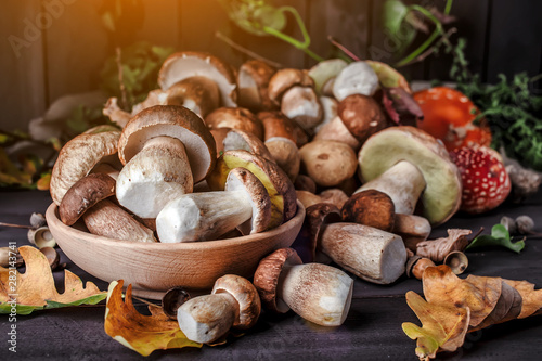 Foto auf Leinwand Logo Mushroom over Wooden Background. Autumn Cep Mushrooms on wood. Autumn forest fruit