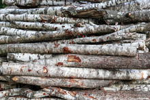 Sawn Logs Of Birch Forestry.  Woodpile, Firewood. View Along The Logs Trunks.